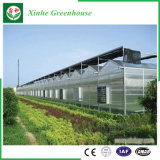 Casa Verde de policarbonato Sistema de hidroponia para produtos hortícolas