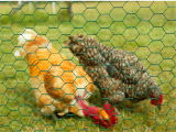 Hex galvanizzato Wire Mesh per Chicken Wire
