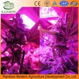 L'alta qualità si sviluppa chiara per Growing Flowering della pianta d'appartamento e della serra