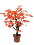 Alta calidad de las plantas artificiales Arce Gu-Mx-arce-70cm