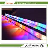 La production de viande Keisue lumière LED croissante