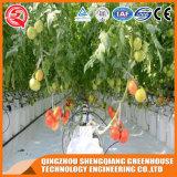 상업적인 Venlo 다중 경간 토마토 Ushroom PC 장 온실