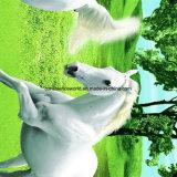 100%Polyester Zerstreung des Märchenland-3D druckte Gewebe für Bettwäsche-Set