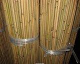 Bastón verde natural del bambú de Tonkin