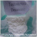 안전한 선적 근육 질량을%s 처리되지 않는 분말 테스토스테론 Decanoate