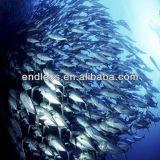 Olio di pesce del Omega 3 di alta qualità Halal Softgel