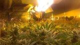 Inducción Megnetic/LED Rojo Azul de la planta crece en todo el espectro de luz para la iluminación de efecto invernadero