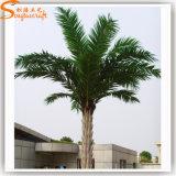 uit Palm van de Datum van de Deur de Zilveren voor de Decoratie van het Plein