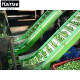 Hairise geneigter Plastikbandförderer mit Baffer für Lebensmittelindustrie