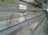 De Kooi van de Kip van het ei voor het Landbouwbedrijf van het Gevogelte van de Laag voor Verkoop