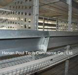 Kooi van de Kip van Poul Tech de Hot Sale Breeder (het Frame van H)