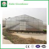 Invernadero plástico de una sola capa comercial de la agricultura