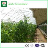 Invernadero de la película plástica de la agricultura del hidrocultivo del bajo costo