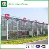 زراعة/تجاريّة زجاجيّة حديقة دفيئة لأنّ زهرات