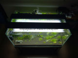 Mini tanque de peixes de aquário de vidro com luz LED