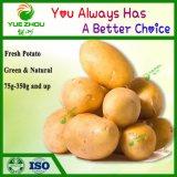 Hot vendre chinois 150g de pommes de terre fraîches avec des prix bon marché