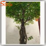Arbre artificiel de Ficus de fibre de verre à feuilles persistantes de plantes ornementales