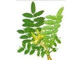 Extracto serrado del Boswellia natural del 100%, ácido el 90% el 65% el 30%, 10:1 de Boswellic