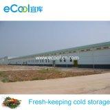 Armazém frio personalizado para a fábrica da trasformação de frutos dos vegetais