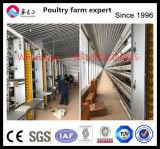 Matériel de ferme de poulet de fournisseur de la Chine