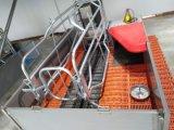 Cages Farrowing Farrowing Maison à vendre