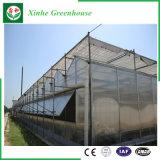 Invernadero de cristal de Venlo de los sistemas de control del Multi-Palmo para Growing vegetal