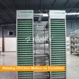 Type automatique pondeuses de H de cages de batterie de volaille