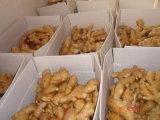 Le gingembre frais de haute qualité (100G+, 150G, 200G+, 250G+)