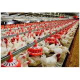 Insieme automatico della strumentazione del pollame dell'alimentatore della vaschetta per i selezionatori