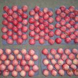Класс A125-150 свежего красного FUJI Apple