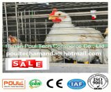 Broiler/Meatus Chicken Cage System for Poultry Farm (Standard Frame has)