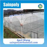 중국 공장 토마토를 위한 유리제 Hydroponic 플레스틱 필름 녹색 집
