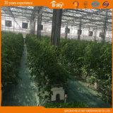 Agribusiness를 위한 높은 Yield 다중 Span Glass Greenhouse