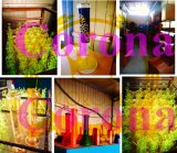 Korona angestrichenes Glaswasser-Rohr Glasdes tabak-Recycler-hohe Farben-grosse Filterglocke-Glasfertigkeit-Aschenbecher-Glasrohr-unbesonnenes heißes Verkaufs-Becher-1bubble