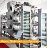 La volaille mettent en cage des machines de ferme de couche avec le buveur de raccord