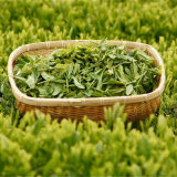De Groene Thee van de Goede Kwaliteit van China