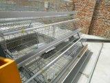 Il pollo automatico pieno della strumentazione di pollicultura mette in gabbia