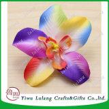 頭状花の日本のCattleyaの蘭