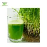 Qualitäts-ISO zugelassener organischer Weizen bedecken Saft-Puder mit Gras