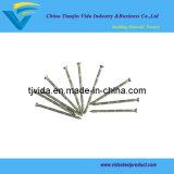 B.v. de Spijkers van het Bamboe Concete met Uitstekende Kwaliteit
