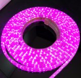 옥외 효력 빛 방수 코드 5050 RGBW Rgbww LED 지구