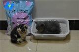 Haustier-Zubehör: Bentonit-Katze-Sänfte - Supergeruch-Steuerung