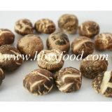 Fungo di Shiitake a strisce secco alimento del tè del cinese tradizionale