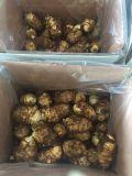 Taro fresco de China para exportar