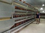 Modèle de Chambre de poulet d'oeufs de ferme avicole pour des couches