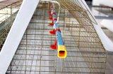 Домашняя птица сельскохозяйственное оборудование цыпленок клеток
