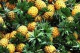 Ananas conserva di frutta nei migliori prezzi delle parti