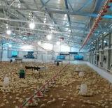 강철 구조물 닭 흘려지는 가벼운 강철 구조물은 닭장을%s 흘렸다