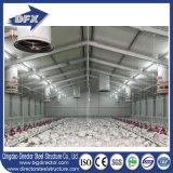 Цыплятина стальной структуры Shandong полуфабрикат расквартировывает с оборудованием цыплятины для фермы бройлера