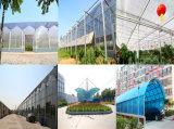 feuilles en plastique de toiture de polycarbonate de 6mm pour la tente de véhicule de lucarne de balcon